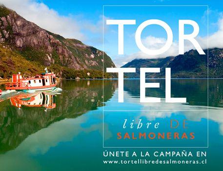 tortel_sin-salmoneras