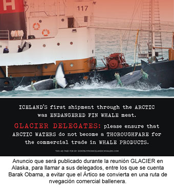 ballena-artico